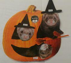 My ferrets!!