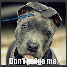 Spend a day with a Pit Bull before you Judge <3