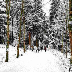 Schwarzsee Spaziergang – Bild des Monats im Jänner 2021 Wilder Kaiser, Snow, Gadgets, Outdoor, Winter Scenery, Ski, Woodland Forest, Creative, Pictures