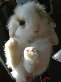 Fluffiest bunny ever!