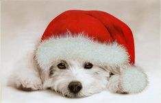 Image result for happy holidays puppy