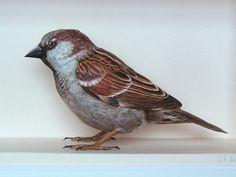 Pássaro-6
