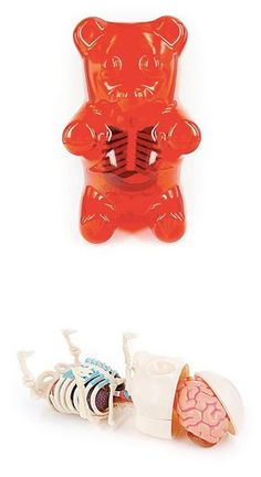 Created by pop-culture artist Jason Freeny, the do-it-yourself model features a snap-together skeleton, detachable organs, and even a removable skullcap for viewing the Gummi Bear's brain!