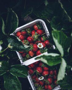 "26.3 k likerklikk, 146 kommentarer – Linda Lomelino (@linda_lomelino) på Instagram: ""Back in Chattanooga, thinking about all those strawberries @maggie_pate picked for us #fweevents"""