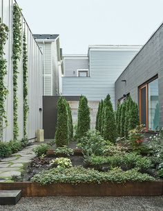 Portland renovated warehouse garden / ph: Matthew Williams