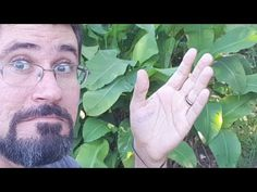 YouTube Lair Ribeiro, Youtube, Professor, Health, Plants, Gardening, Rose, Medicinal Herbs, Medicinal Plants