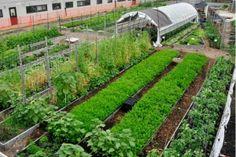 Urban farming is a hit with New York City college students #urbanfarming #urbanfarm #farm