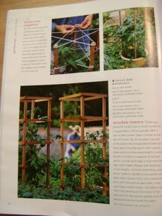"""Top left """"Twine star supports""""---pentagrams in the garden for tomatoes or beans or sweetpeas...or..."""