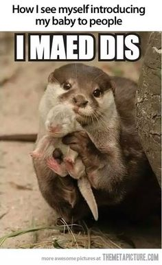 "71 Pregnancy Memes - ""How I see myself introducing my baby to people: I maed dis."" # pregnancy humor 71 Funny Pregnancy Memes with Laughs for Moms and Dads Funny Animal Jokes, Cute Funny Animals, Funny Cute, Cute Animal Humor, Otters Funny, Animals Doing Funny Things, Super Funny, Cute Animal Quotes, That's Hilarious"
