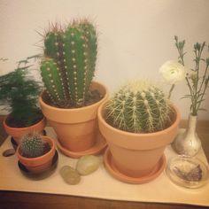 Kaktusar...