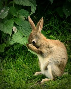 rabbit by patries71 on Flickr.