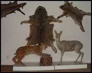 Slovakia - Heart of Europe: Natural Scientific Museum, Presov Heart Of Europe, Museums, Moose Art, Natural, Animals, Animales, Animaux, Animal, Animais