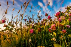 Sky, grass and clover .: by Carl Alexander Hopland on 500px
