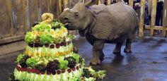 Maruška oslavila v plzeňské zoo 2. narozeniny. Dostala obří zeleninový dort