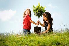 Bari -  Giornata nazionale dell'albero. Promozioni iniziative sul territorio regionale