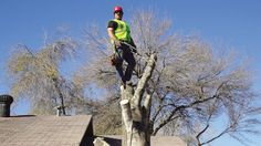 Professional Tree Lopping Services in Sydney