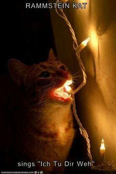"Cat ""singing"" Rammstein's song 'Ich Tu Dir Weh'!! Cute!!"