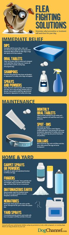 Flea Fighting Solutions: Use this infographic to help determine what preventive or treatment will work best for you and your furry friend.   Dog Fancy