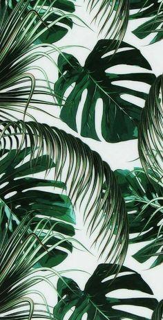 Arranged for iPhone X, Beautiful Wallpapers, Background - Tapeten ideen - Hintergrundbilder Telefon Leaves Wallpaper Iphone, Plant Wallpaper, Tropical Wallpaper, Wallpaper Backgrounds, Vintage Backgrounds, Wallpaper Ideas, Green Wallpaper, Iphone Backgrounds, Iphone Wallpaper Jungle