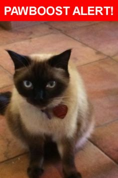Please spread the word! Rocco was last seen in Albuquerque, NM 87111.  Description: About 5 years old Siamese  Nearest Address: 9716 Admiral Emerson NE