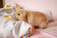 Cute Bunny ~ come here , i will eat you <3 on we heart it / visual bookmark #49364793