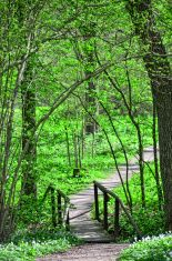 Bridge in forest stock photo