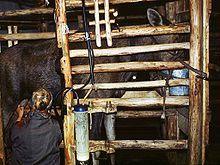 Kostroma Moose Farm - FMP research
