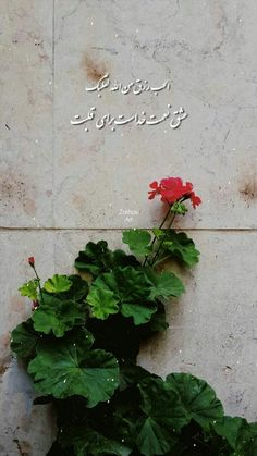 Camera Wallpaper, Bear Wallpaper, Wallpaper Iphone Cute, Wallpaper Backgrounds, Text Pictures, Cute Couple Pictures, Islamic Pictures, Persian Poetry, Anime Muslim