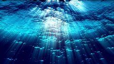 Underwater Wallpaper, Underwater Background, Ocean Wallpaper, Underwater Video, Underwater Images, Ocean Underwater, Zoom Wallpaper, Computer Wallpaper, Wallpaper Backgrounds