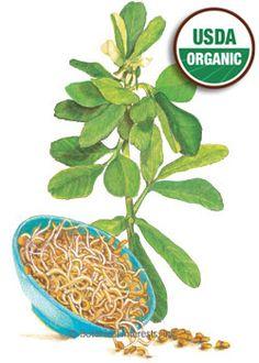 Fenugreek Organic HEIRLOOM Seeds - Botanical Interests (to grow my healing herb garden)