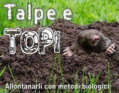 Allontanare topi e talpe con repellenti naturali - Coltivare l'orto