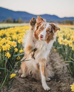 The Lorax, Someone Like You, Get Well, Say Hello, Pup, Corgi, Adventure, Animals, Instagram