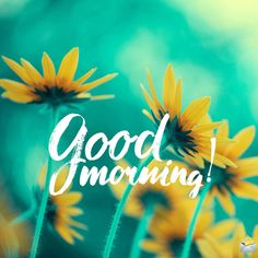 Good morning image with yellow flowers. Good Morning Babe Quotes, Good Morning Gif Funny, Latest Good Morning Images, Good Morning Beautiful Pictures, Beautiful Morning Messages, Good Morning Sunshine, Good Morning Good Night, Morning Memes, Good Morning Letter