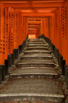 Fushimi Inari shrine, Kyoto, Japan. The day I hiked up Mt. Inari...unforgettable. Blessed to have done this with Geller.