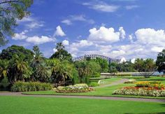 Royal Botanic Gardens & Domain, Sydney - with the Opera House sails and Bridge in background.
