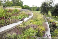 This stylish dry meadow, designed by Adam Woodruff, contains plants from all over the world but creates harmony because the plants come from related habitats, write the authors of PLANTING IN A POST-WILD WORLD.