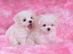 cute puppies..