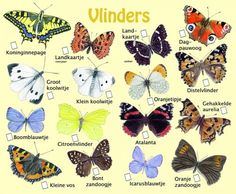 Animals For Kids, Animals And Pets, Growing Gardens, Educational Crafts, Animal Posters, Animal Species, Nature Crafts, Fauna, Outdoor Life