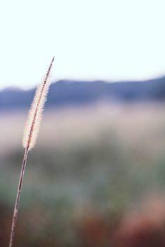 Dandelion, Flowers, Plants, Photography, Image, Photograph, Dandelions, Fotografie, Photoshoot