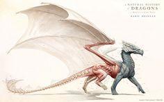 Dragon anatomía