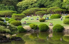 Shinjuku Gyoen National Garden Attractions In Tokyo, Shinjuku Gyoen, Big Garden, World's Biggest, Capital City, Golf Courses, Tours, The Incredibles, Japan