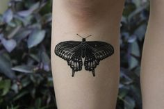 #Black #Bug #Butterfly #Insect #Line #Swallowtail #Symmetrical #Tattoo #Temporary #Winged