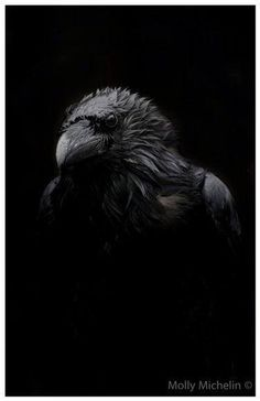 Raven by Molly Michelin                                                       …