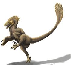 "Is Balaur Prancing? :  Balaur bondoc (""Stocky Dragon""), a relative of Velociraptor and feathered dinosaurs was recently discovered in Romania."