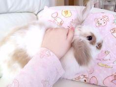 pink, kawaii, and rabbit image Fluffy Animals, Baby Animals, Cute Animals, Wallpaper Fofos, Cute Baby Bunnies, Pet Rabbit, Funny Rabbit, Fur Babies, Kitten