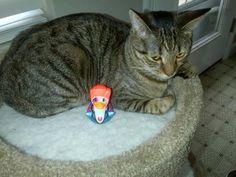 Meu gato ficar chateado com um pato de David Bowie. - Album em Imgur