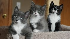 lovely kittens iphone7 wallpaper download high size resolution