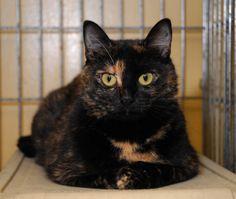 Adopt Thumbelina! http://www.petfinder.com/petdetail/17313406
