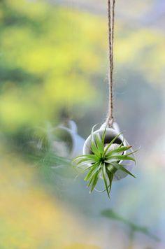Mini Hanging Vase Planter for succulent, water plant, air plant...