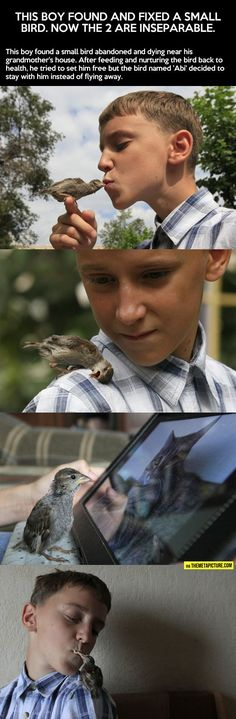This boy found and fixed a small bird and now they're inseparable…